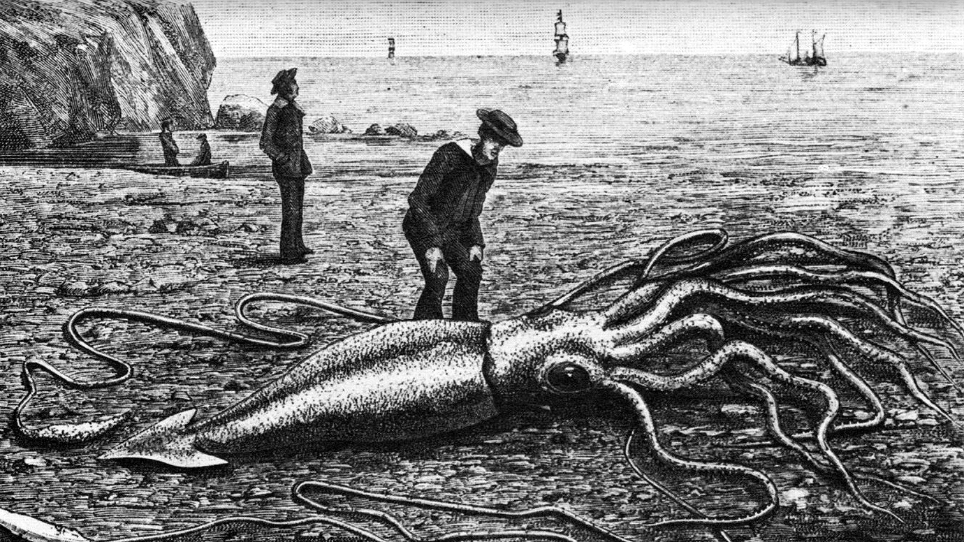 Giant squid's full genome revealed, providing clues about mysterious creature